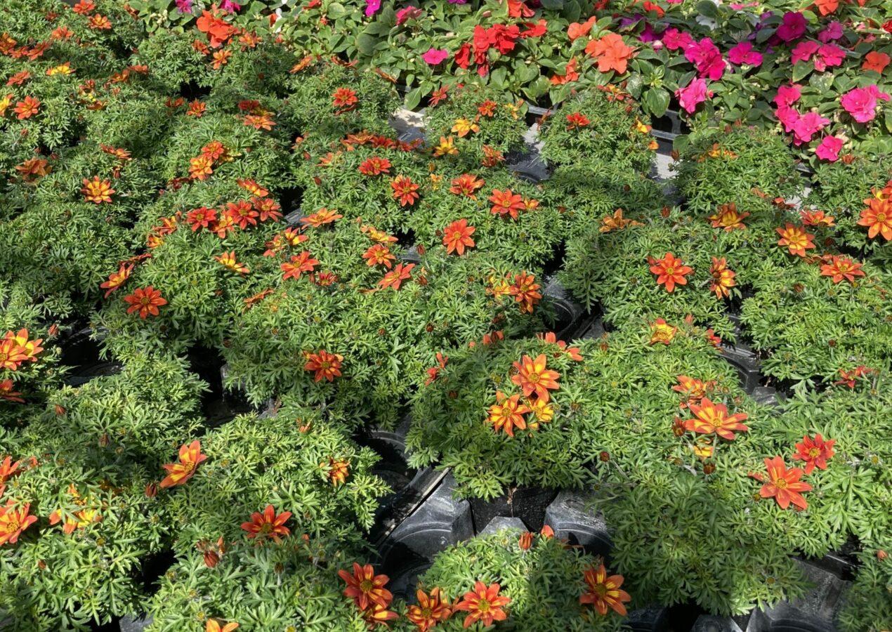 Die Pflanzensaison ist eröffnet!